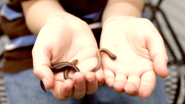 Worms crawling in Kids Hand video