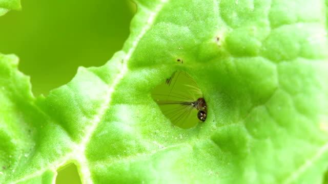 worms eat green vegetables - dziura filmów i materiałów b-roll