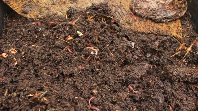 Worms - Stock video Animal, Dirt, Fishing, Tiger, Trout