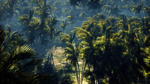 Wrecked tank lies in the jungle in the middle of palm trees and tropical vegetation