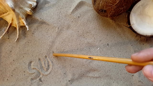 writes the word summer, on the sand of the beach with a seashell and a coconut video