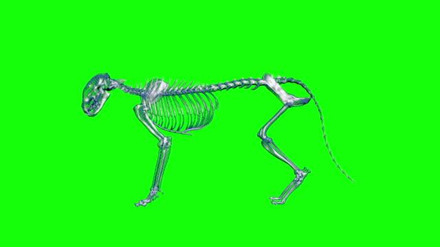 xray kedi kedi looped alfa görüntüleri dahil - i̇nsan i̇skeleti stok videoları ve detay görüntü çekimi
