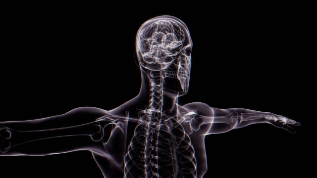 vídeos y material grabado en eventos de stock de radiografía del cuerpo humano | loopable - espalda partes del cuerpo