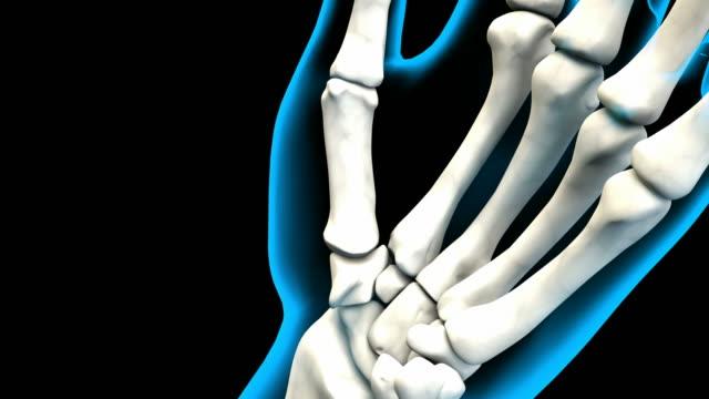X-Ray of Human Hand bones Grasping 4K. ultra HD video