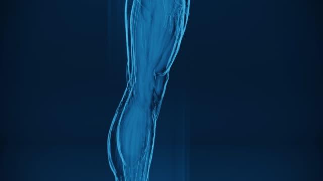 인간의 근육의 4k 엑스레이 | 스톡 비디오 - 근육질 체격 스톡 비디오 및 b-롤 화면