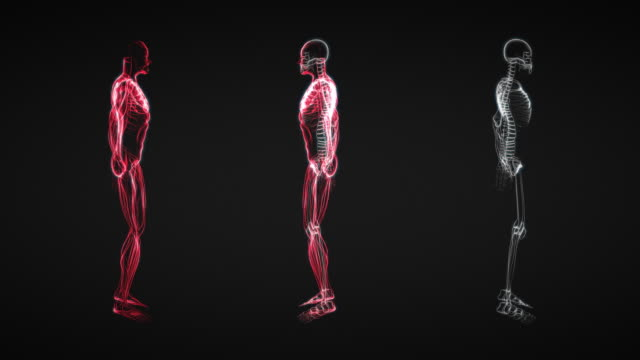 X-Ray of Human Skeleton & Muscle (HD) video