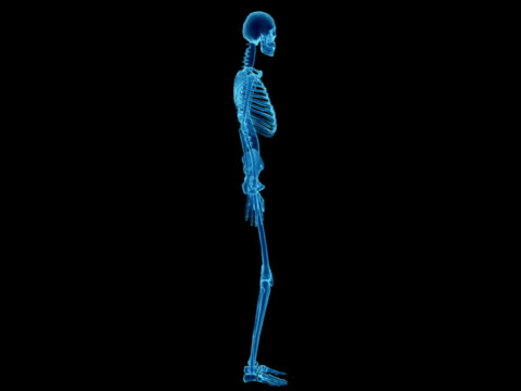 X-ray of human skeleton for study video