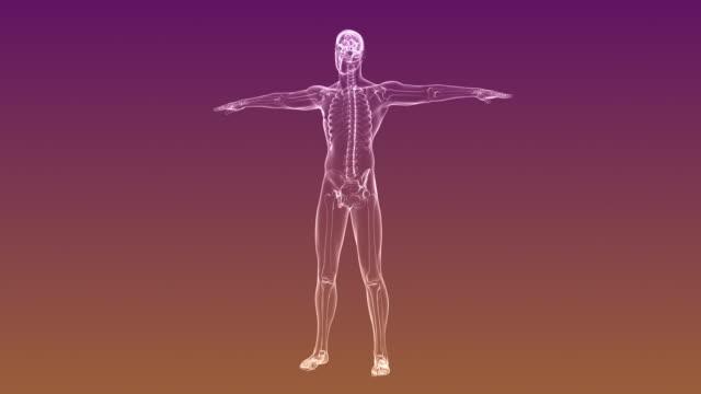 Radiographie du squelette humain | Bouclables - Vidéo