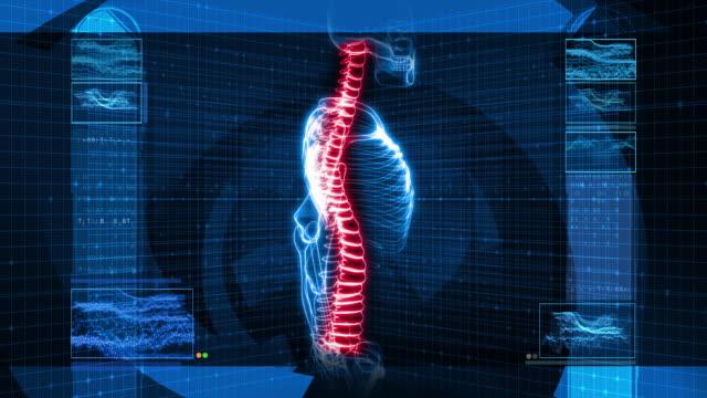 X-Ray of Human Skeleton (HD) video