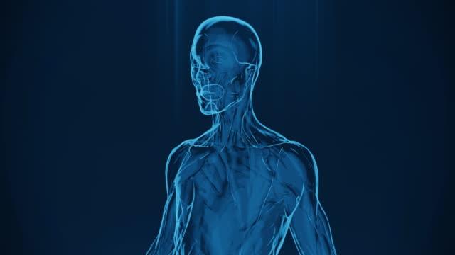 vídeos y material grabado en eventos de stock de radiografía 4k de los músculos de la mujer humana vídeo de stock - columna vertebral humana