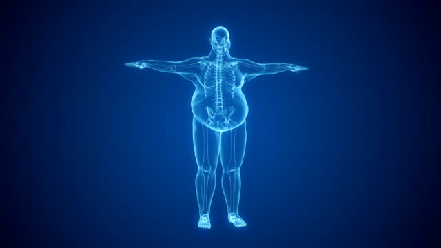 x-ray of overweight man with skeleton | loopable - sovrappeso video stock e b–roll