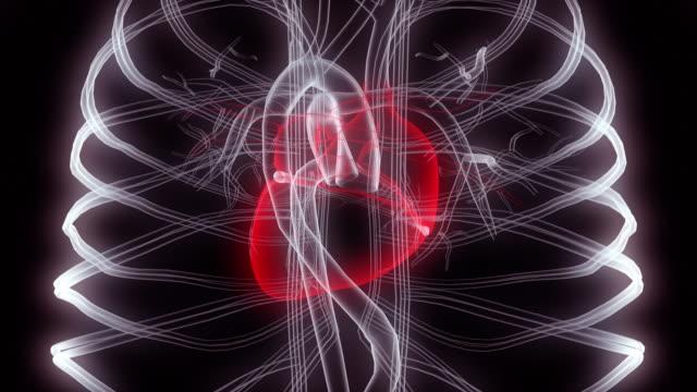 vídeos de stock e filmes b-roll de x-ray of the heart in the human chest - enfarte