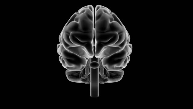 X-ray style brain, 360 rotation. Loop of a rotating human brain rendered in x ray style shading. cerebellum stock videos & royalty-free footage