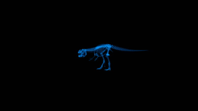 Xray Trex walking, roraring, 4K Xray Trex walking, roraring, 4K animal skeleton stock videos & royalty-free footage