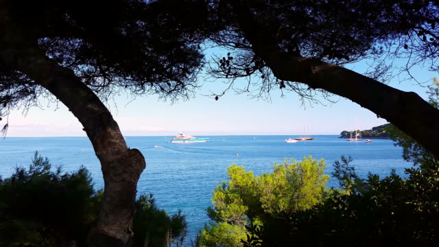 yachts in a blue sea behind the trees, french riviera - 2016 video stock e b–roll