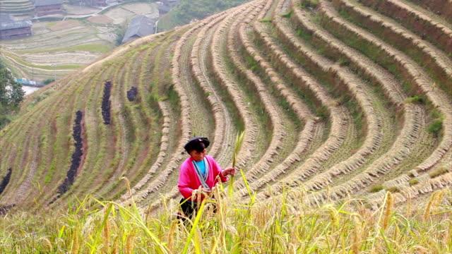 Yao Ethnic Minority Farmer working in his rice paddy video