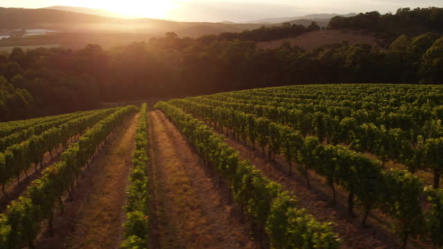 yarra valley vineyard - azienda vinicola video stock e b–roll