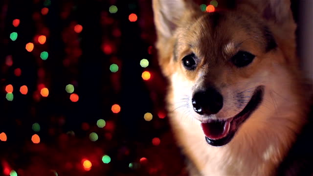 2018 Year of the Dog! Happy New Year and Merry Christmas! Happy holiday! video