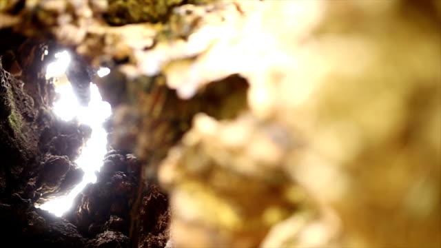 1000 年古いオークの木 - 中林大樹点の映像素材/bロール