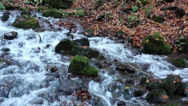 bolu yedigöller milli parkı. - ihsangercelman stok videoları ve detay görüntü çekimi