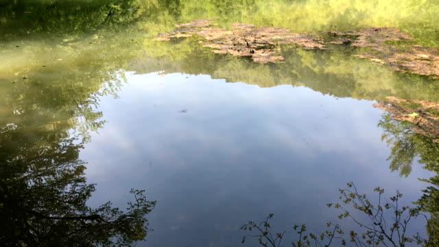 vidéos et rushes de yedigoller yedigoller - lac reflection lake