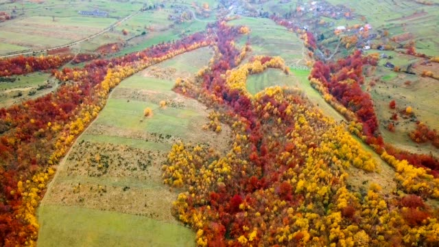 Yellow and red trees near Carpathian village. Aerial view. Flying over beautiful autumn forest. video