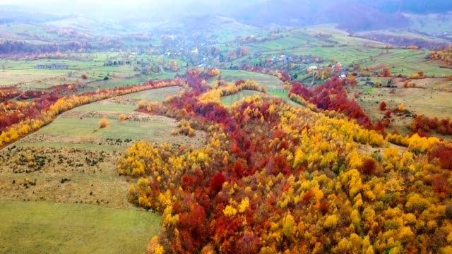 Yellow and red trees near Carpathian village. Aerial view. Flying over beautiful autumn forest. Tilt and down. video