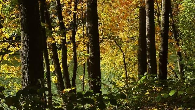 yellow autumn foliage on the shore of the lake