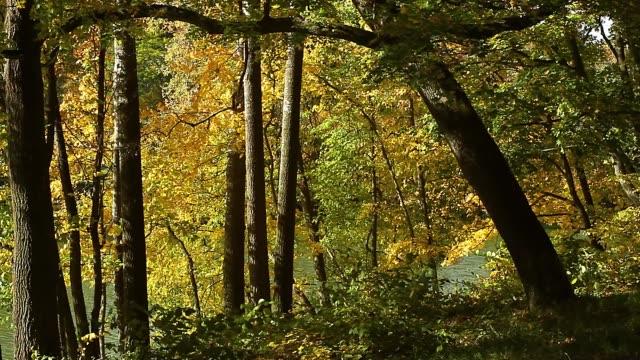 vídeos de stock, filmes e b-roll de folha amarela do outono na costa do lago - bétula