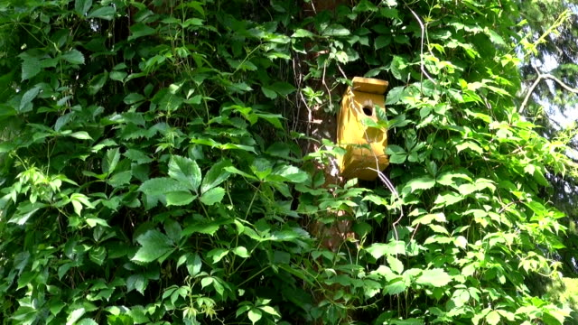 Yellow bird nesting box video