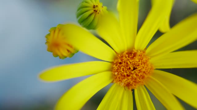 vídeos de stock e filmes b-roll de yellow blooming flowers in wild field - ambiente vegetal