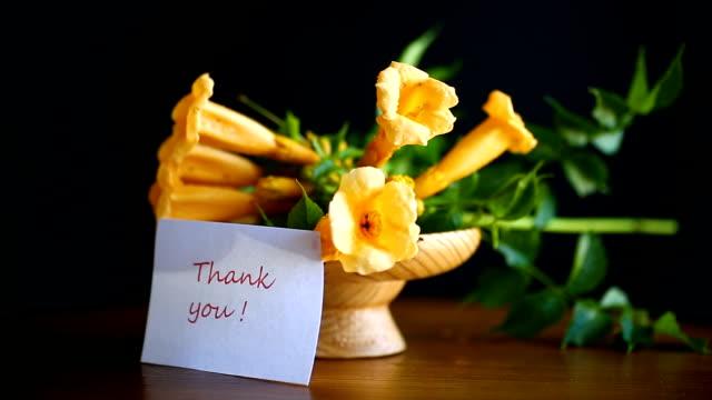 floraison jaune fleurs campsis - Vidéo