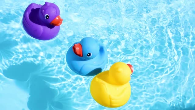 Yellow, blue and purple rubber ducks swim relaxed from top to bottom, floating casually and relaxed on the sparkling and crystal-clear water of a pool