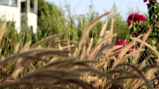 vídeos de stock e filmes b-roll de yellow botanic plants at garden - funchal madeira