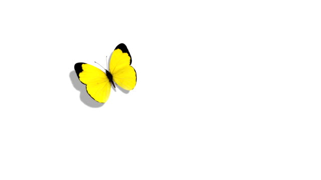 yellow butterfly flying on a blue background - butterfly stock videos and b-roll footage