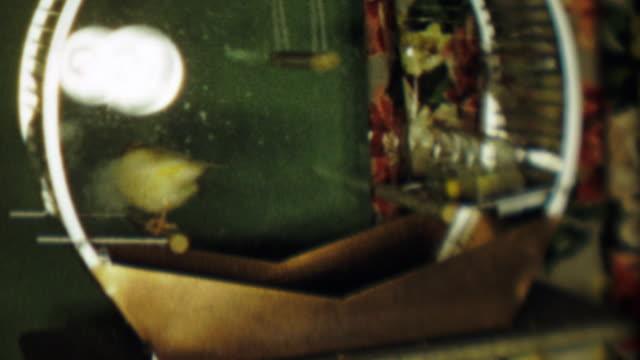 1952: sarı kanarya kuş kafesli atlar levrek hali için huzur içinde. - kafes sınırlı alan stok videoları ve detay görüntü çekimi