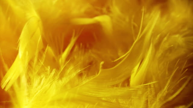 Yellow Feathers video