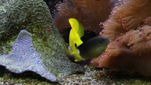 yellow fish. - 20 sekunder eller längre bildbanksvideor och videomaterial från bakom kulisserna