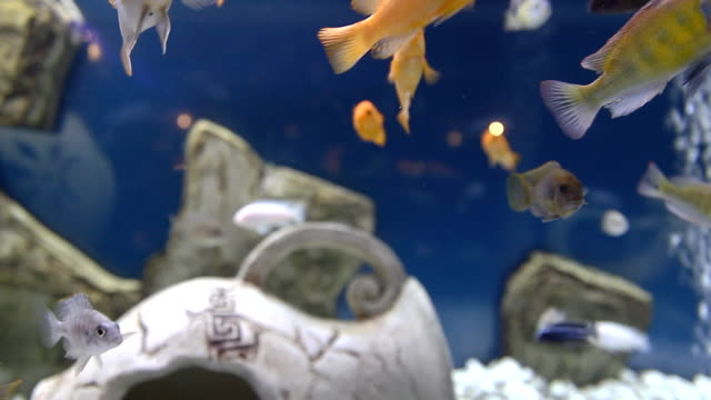 Yellow fishes and ancient bowl video