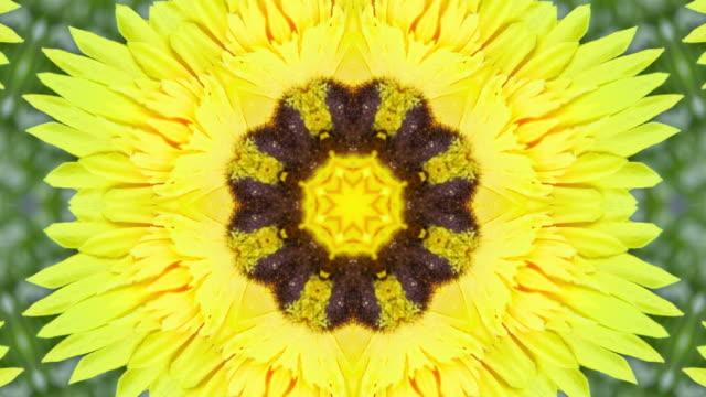 gul blomma kalejdoskop stil - mandala bildbanksvideor och videomaterial från bakom kulisserna