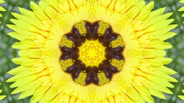 stockvideo's en b-roll-footage met gele bloem caleidoscoop stijl - mandala