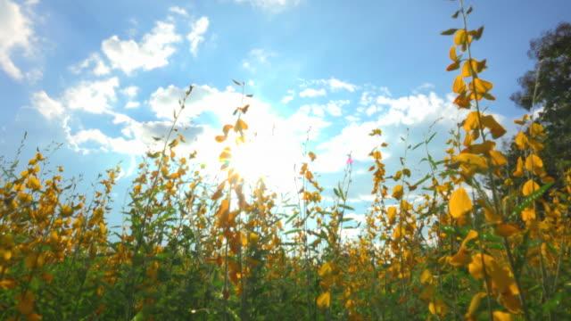 vídeos y material grabado en eventos de stock de color de la flor amarilla contra la luz del sol - escena no urbana