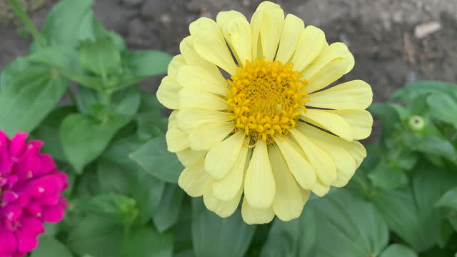 yellow flower video