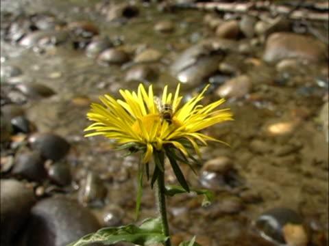 stockvideo's en b-roll-footage met yellow flower. - natuurgrond