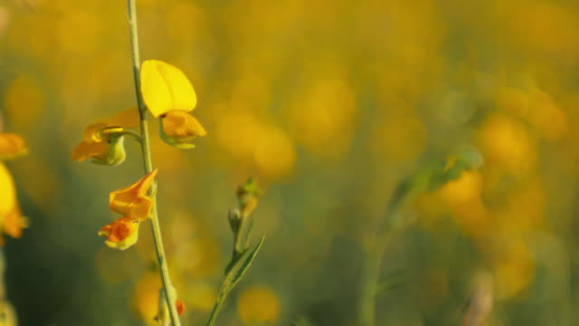 Yellow flower with green grass , Nature footage background video