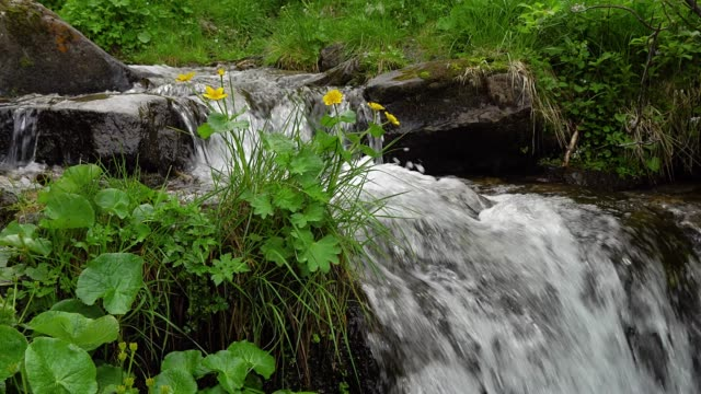 yellow flowers and mountain stream