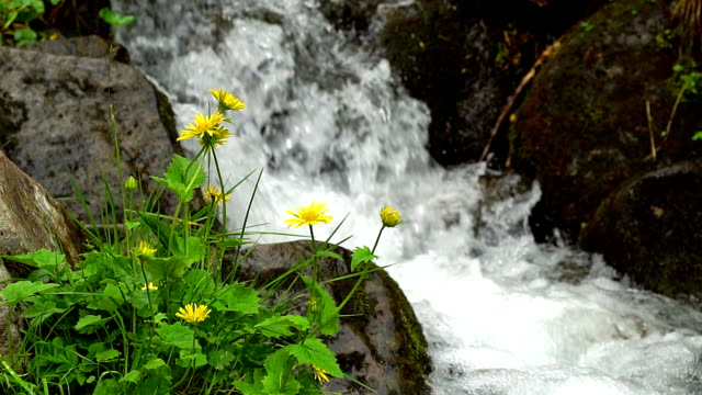 yellow flowers and mountain stream video