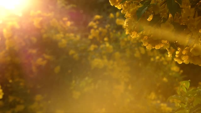 Yellow flowers at sunset Flowers in warm light. pollen stock videos & royalty-free footage