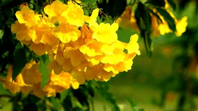 Yellow flowers blowing in the wind Flowers in daylight. arthropod stock videos & royalty-free footage