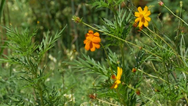 Yellow flowers in the garden video